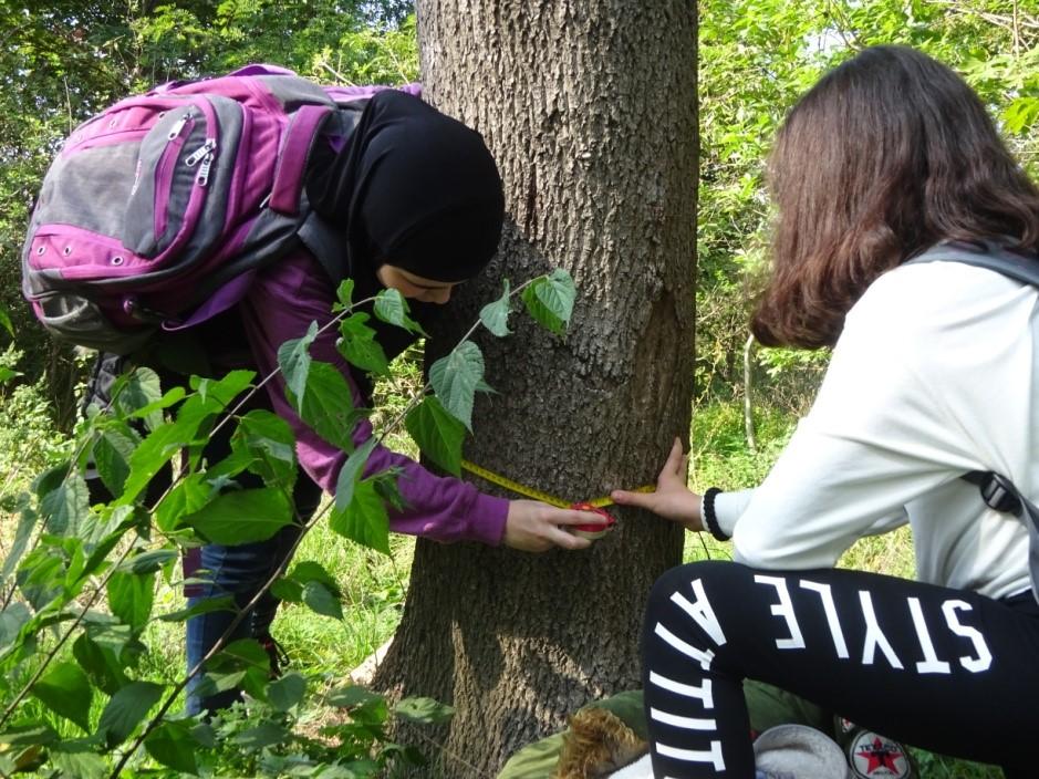Schülerinnen am Abmessen eines Baumes